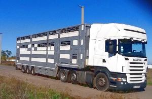 Как правильно перевозить животных