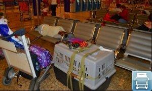 Перевозка собаки в самолете