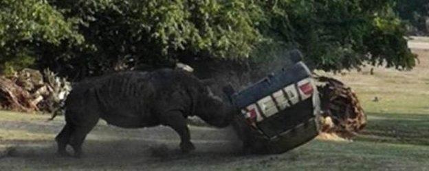 носорог пинает машину
